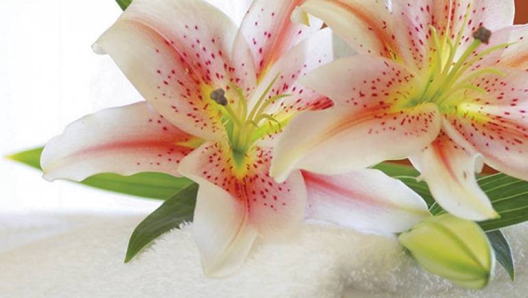 spa-maya-tamarindo-header-flower.jpg